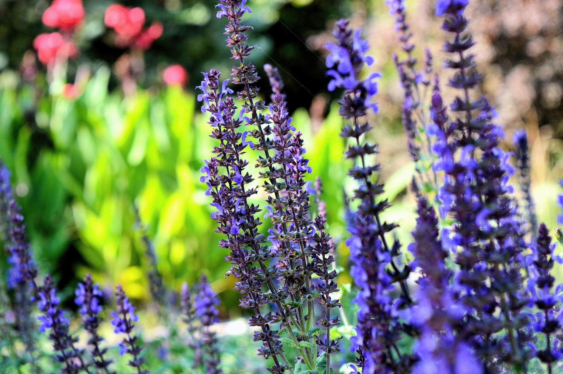 Lierre lavender essential oil soap lip balm tea